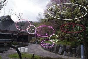 春の庭図解