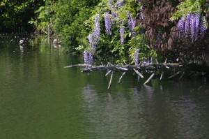 伏木高校西側ため池