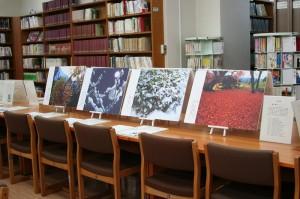 幡谷廣司さんの万葉植物の美しい写真パネル